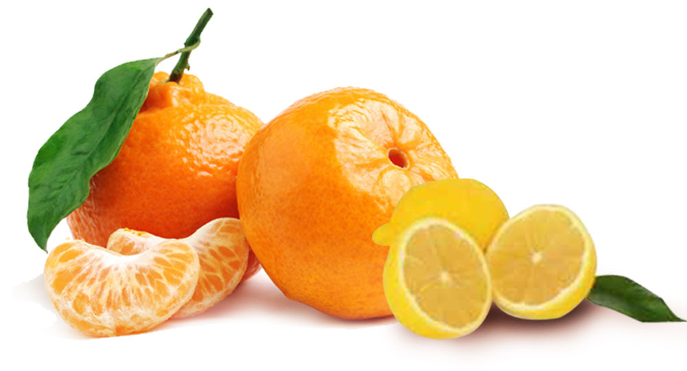 Vitamin C can cut time spent in intensive care units